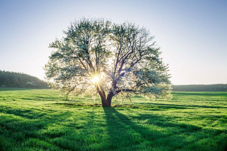 Natura&Ambiente, impianti di alberi e arbusti