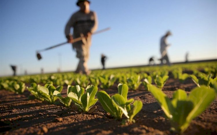 Filiera agricola in crisi, manca la manodopera stagionale.