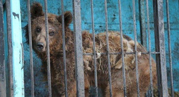 Il lockdown infinito degli zoo