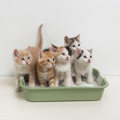 Medicina Veterinaria: il gatto e le patologie dell'apparato urinario