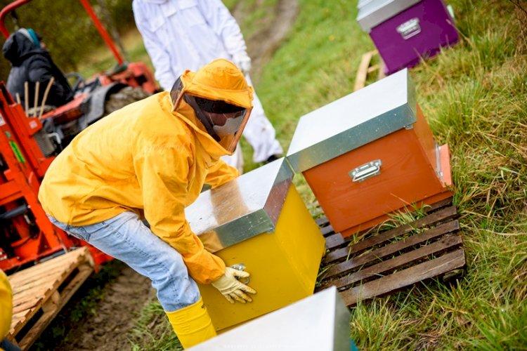 Lo strumento finanziario  a sostegno dell'apicoltura