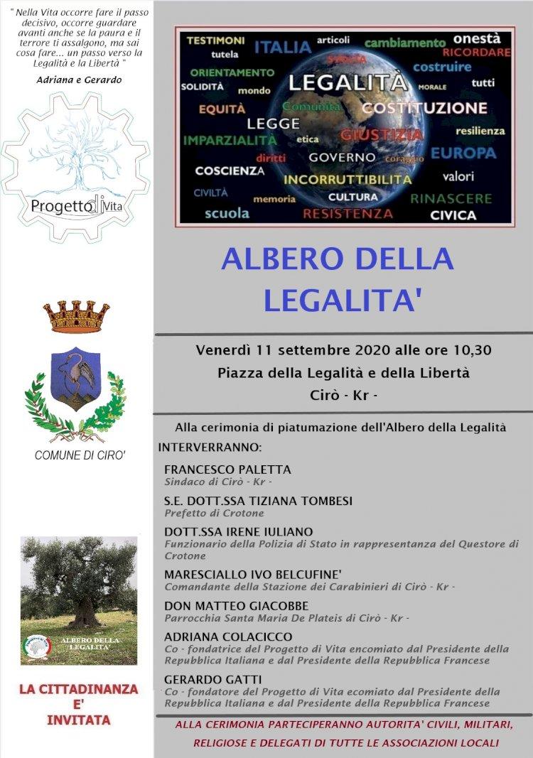 L'Albero della legalità a Cirò