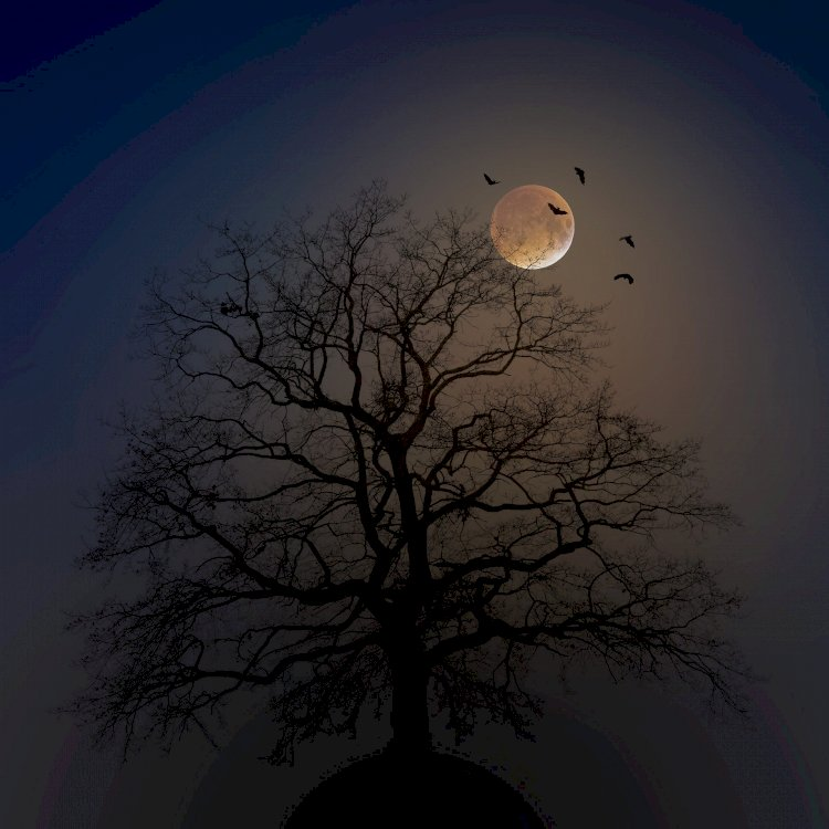 Guarda la luna
