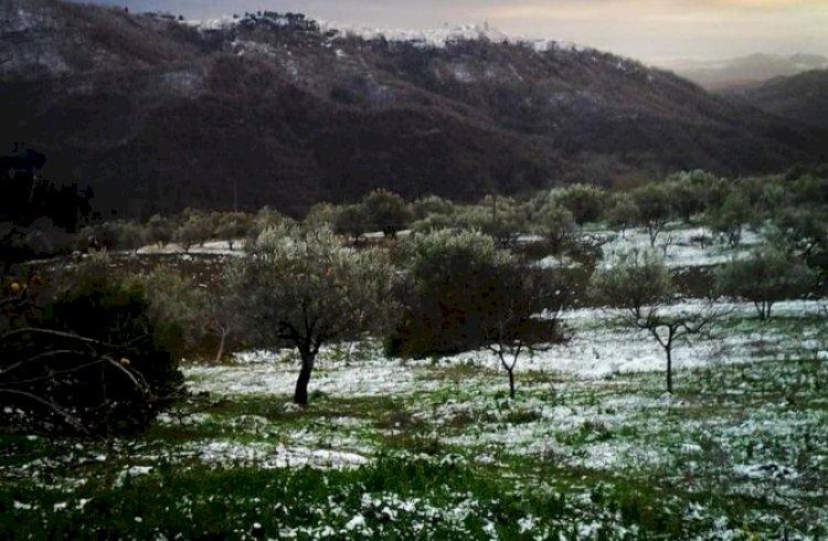 Storie di Cambiamenti: Marco Cacciavillani, da IT Retailer ad imprenditore agricolo