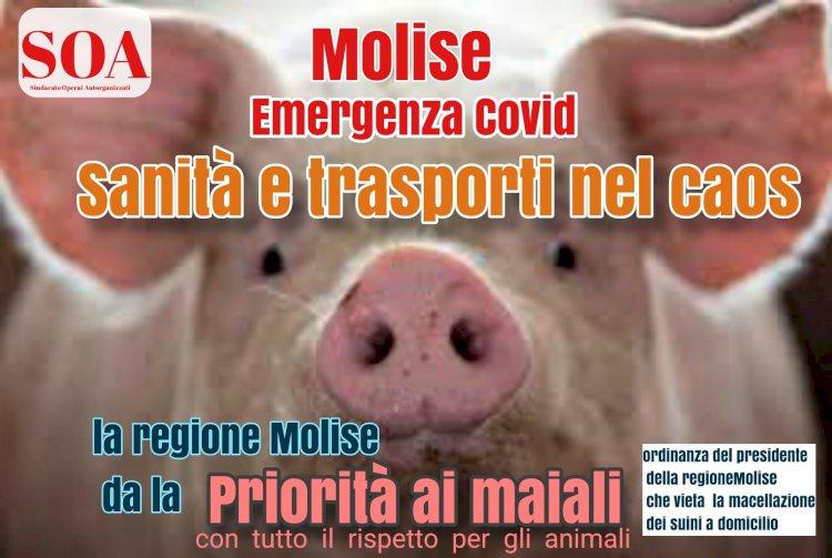 Emergenza covid in Molise, sanità e trasporti nel caos