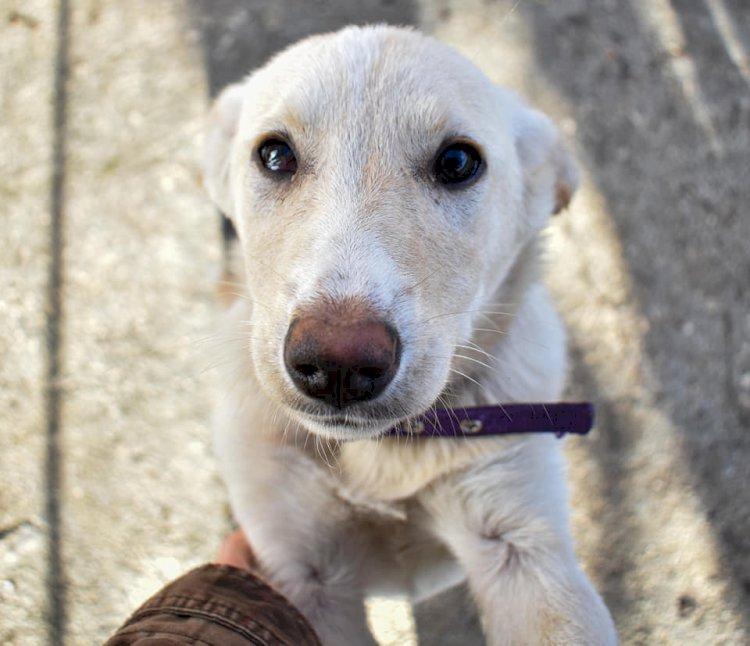 Juno, una piccola creatura pronta a trovare una famiglia