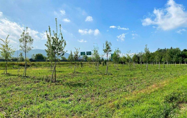 Un «bosco» per la salute a Casteldebole