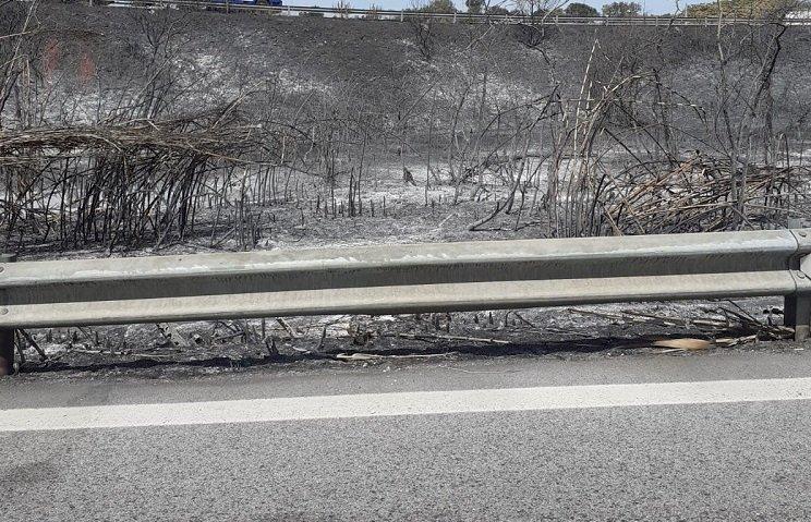 Basso Molise in fiamme, Ricciardi: «è una emergenza, subito interventi economici»